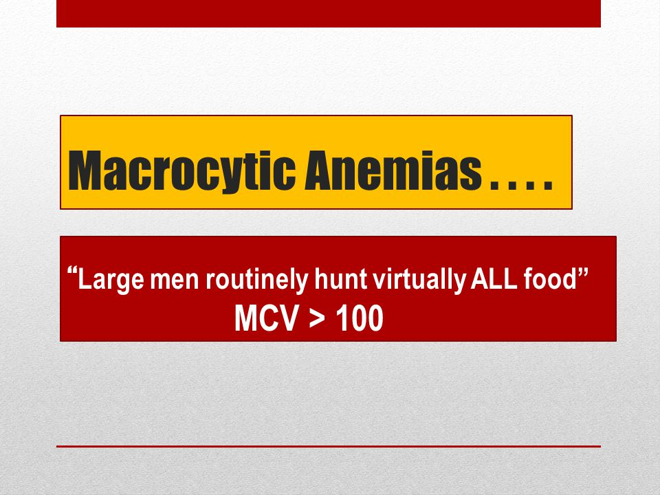 Macrocytic Anemias . . . . Large men routinely hunt virtually ALL food MCV > 100