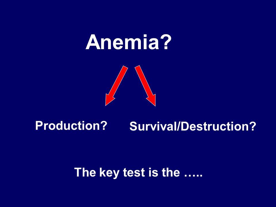 Anemia Production Survival/Destruction The key test is the …..