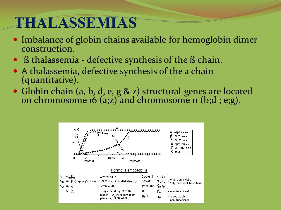 THALASSEMIAS Imbalance of globin chains available for hemoglobin dimer construction. ß thalassemia - defective synthesis of the ß chain.