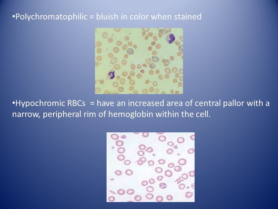 Polychromatophilic = bluish in color when stained