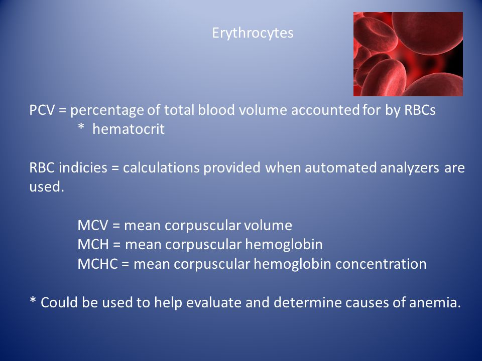 Erythrocytes PCV = percentage of total blood volume accounted for by RBCs. * hematocrit.