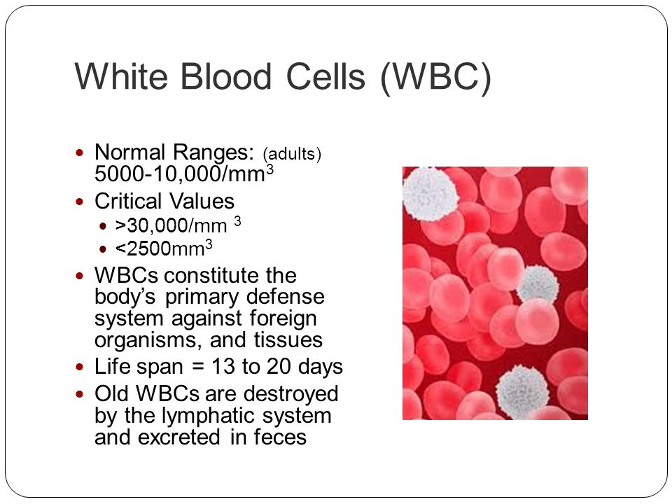 White Blood Cells (WBC)