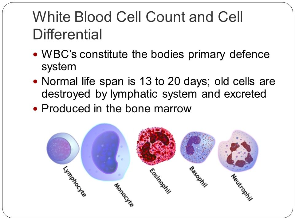 White Blood Cell Count and Cell Differential