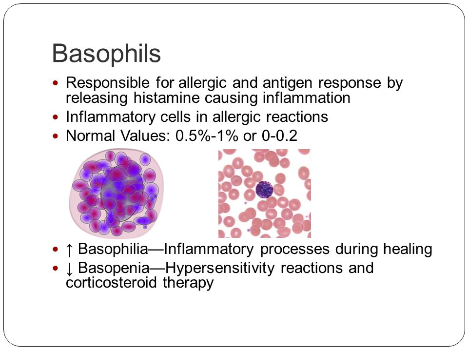 Basophils Responsible for allergic and antigen response by releasing histamine causing inflammation.