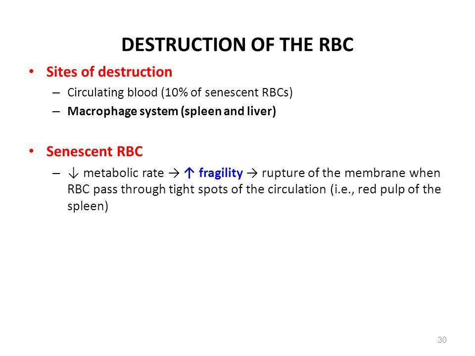 DESTRUCTION OF THE RBC Sites of destruction Senescent RBC