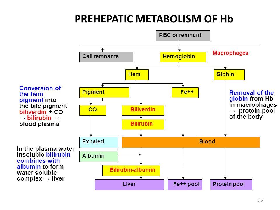 PREHEPATIC METABOLISM OF Hb