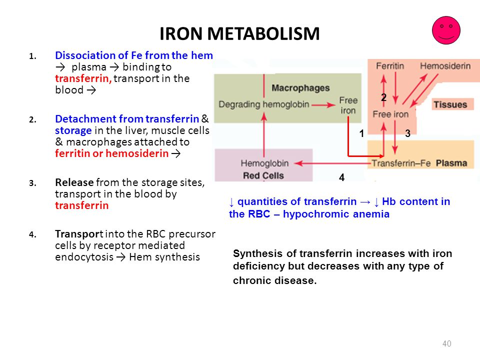 IRON METABOLISM Dissociation of Fe from the hem → plasma → binding to transferrin, transport in the blood →
