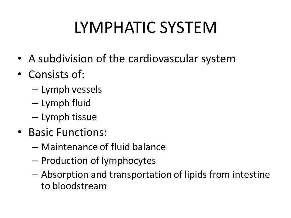 LYMPHATIC SYSTEM A subdivision of the cardiovascular system