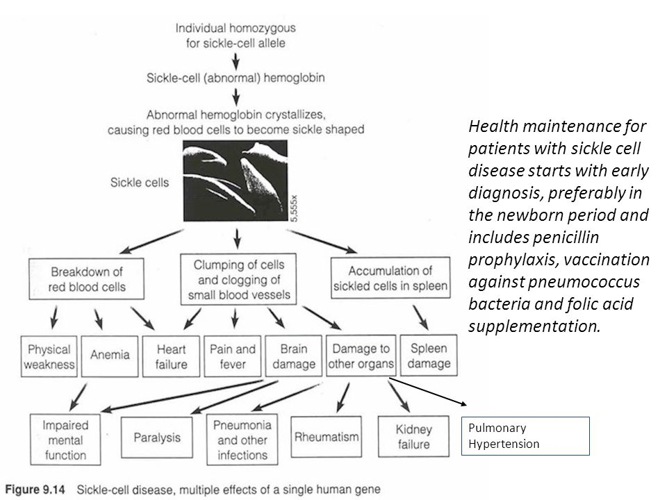 Health maintenance for patients with sickle cell disease starts with early diagnosis, preferably in the newborn period and includes penicillin prophylaxis, vaccination against pneumococcus bacteria and folic acid supplementation.