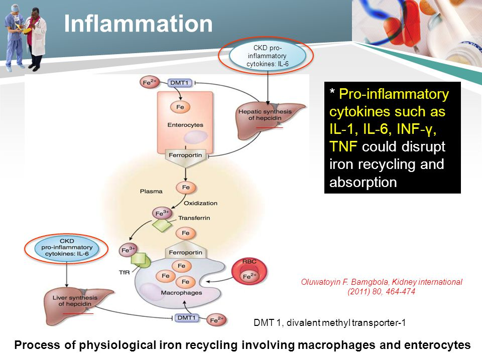 Inflammation CKD pro-inflammatory cytokines: IL-6.