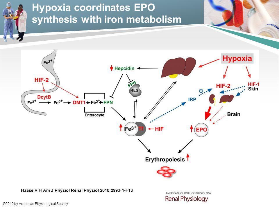 Hypoxia coordinates EPO synthesis with iron metabolism
