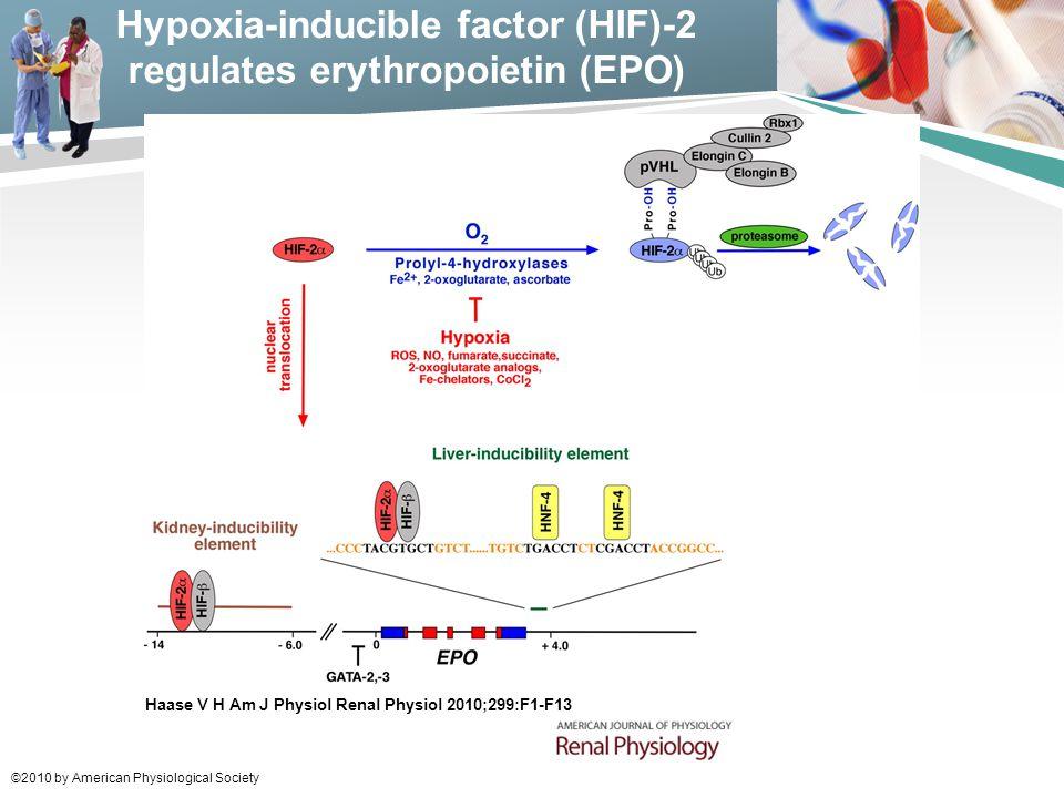 Hypoxia-inducible factor (HIF)-2 regulates erythropoietin (EPO)