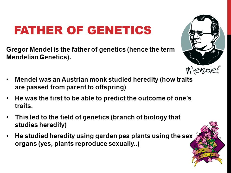 Father of Genetics Gregor Mendel is the father of genetics (hence the term Mendelian Genetics).