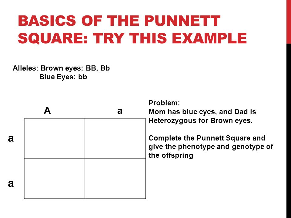 Basics of the punnett square: Try this example