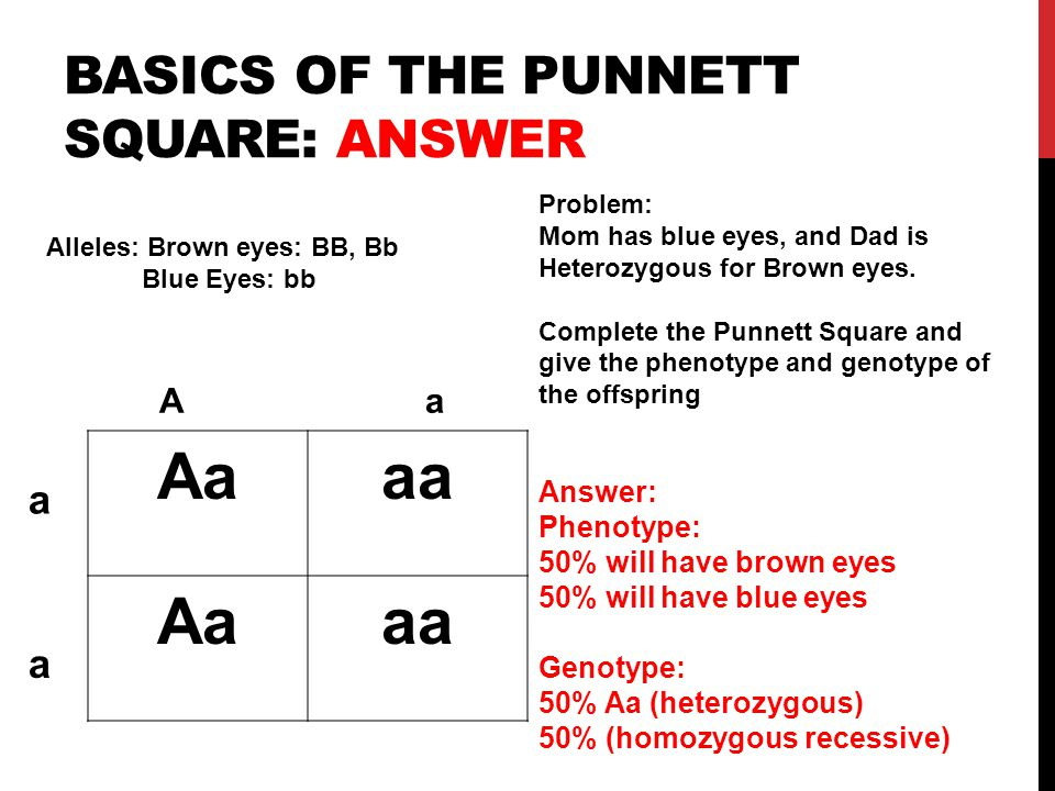 Basics of the punnett square: answer
