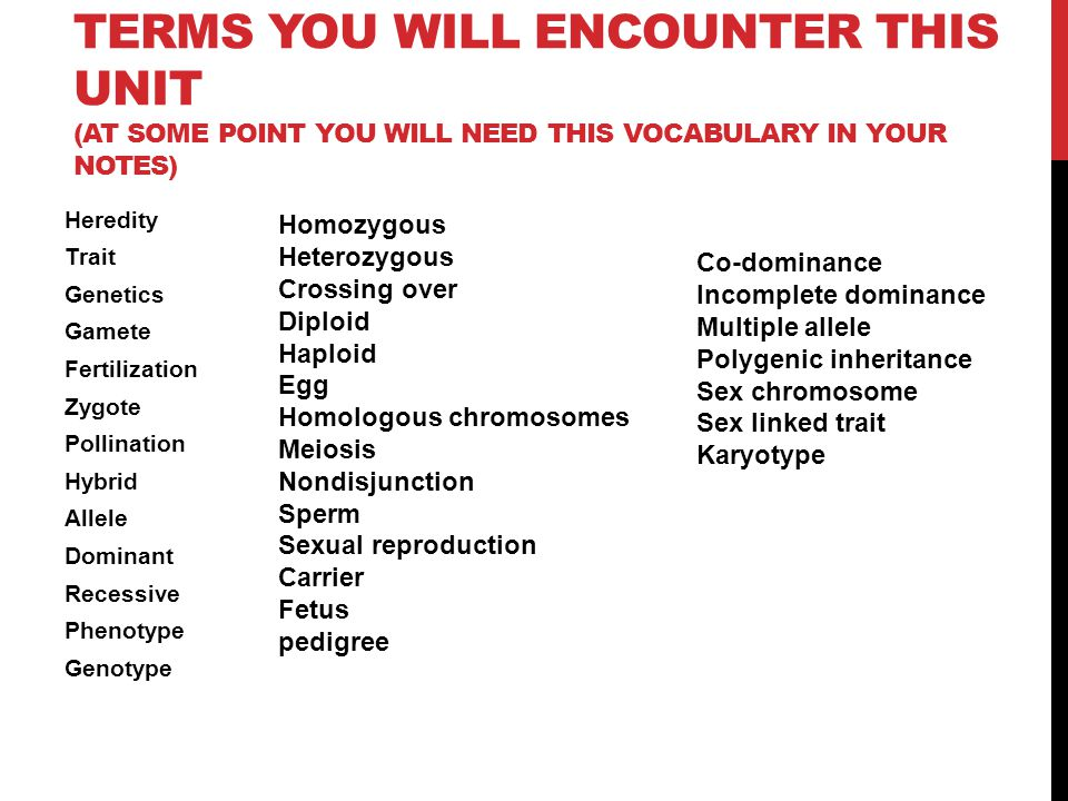 Terms You will encounter this unit (at some point you will need this vocabulary in your notes)