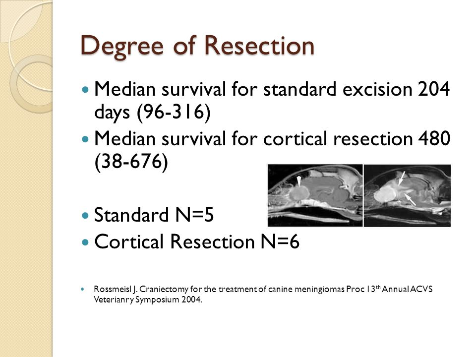 Degree of Resection Median survival for standard excision 204 days (96-316) Median survival for cortical resection 480 (38-676)