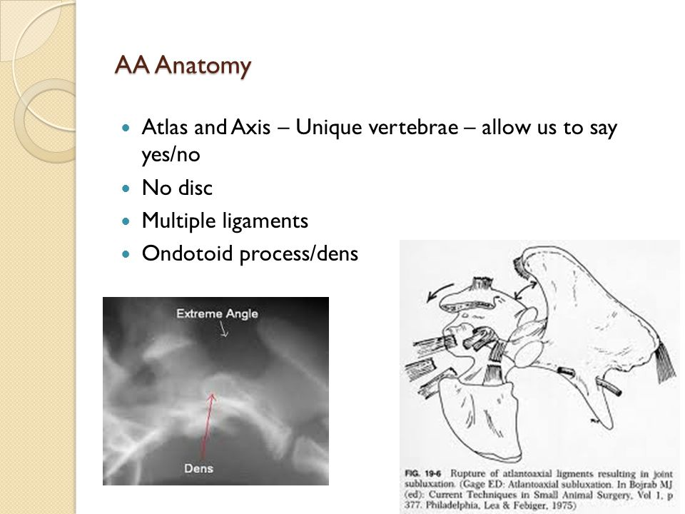 AA Anatomy Atlas and Axis – Unique vertebrae – allow us to say yes/no