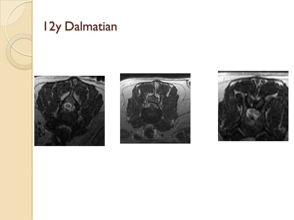 12y Dalmatian