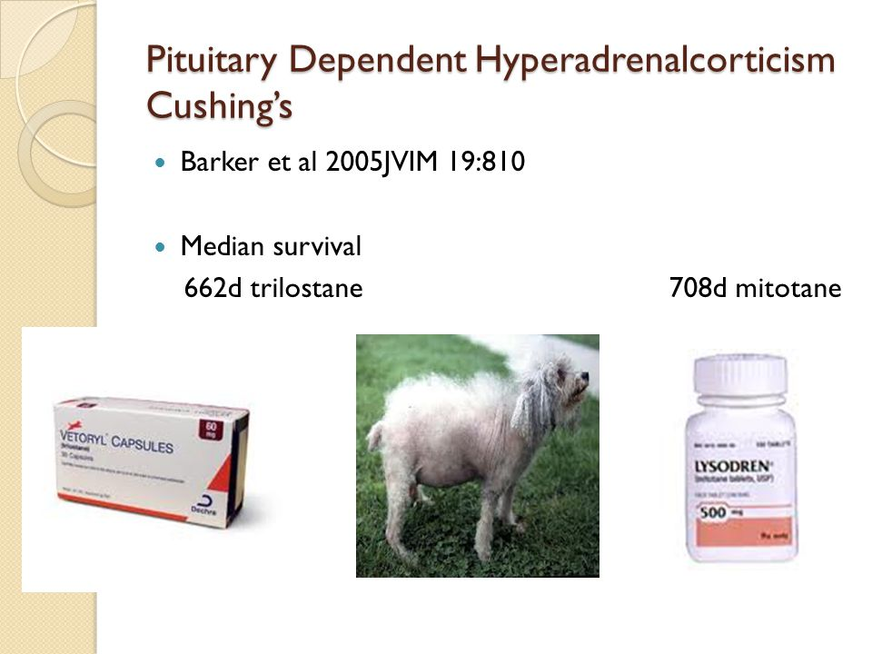 Pituitary Dependent Hyperadrenalcorticism Cushing's