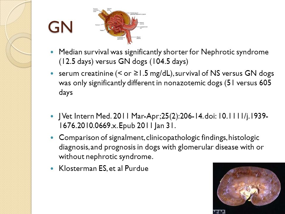 GN Median survival was significantly shorter for Nephrotic syndrome (12.5 days) versus GN dogs (104.5 days)