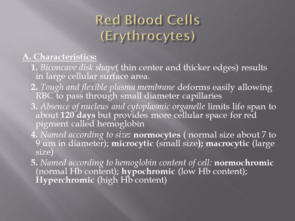 Red Blood Cells (Erythrocytes)