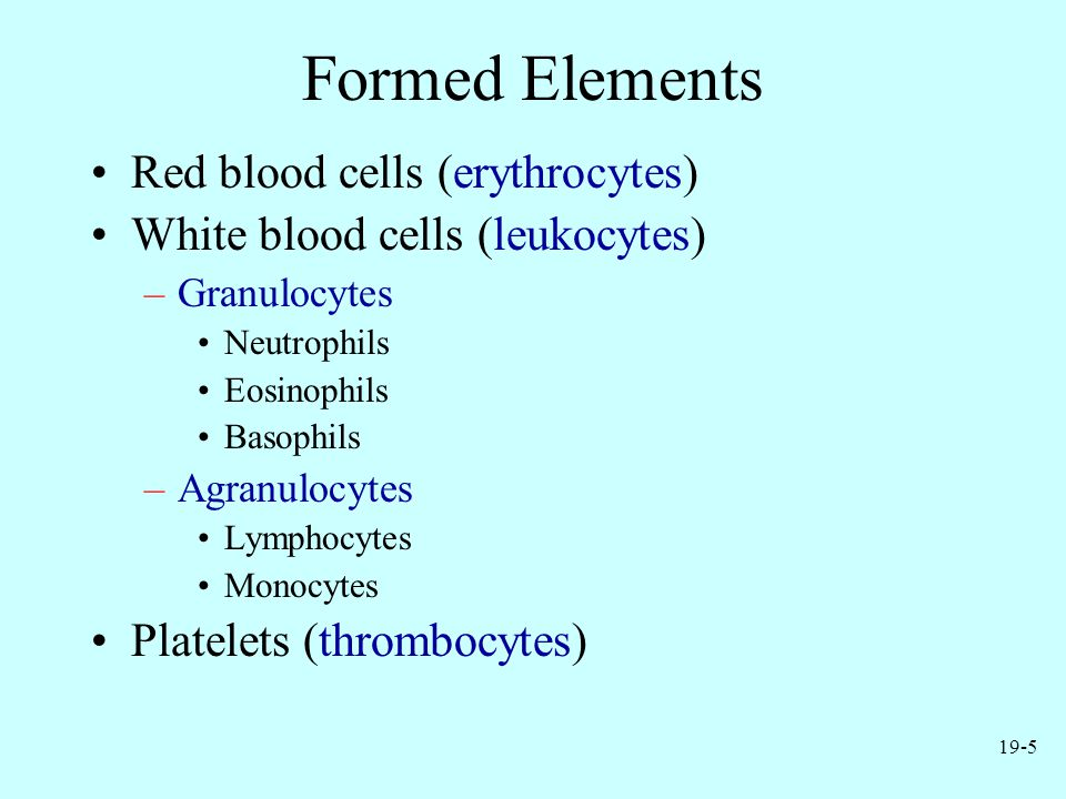 Formed Elements Red blood cells (erythrocytes)