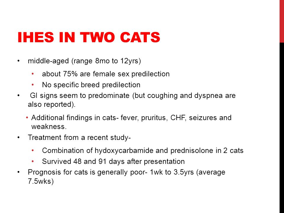 iHES in two cats middle-aged (range 8mo to 12yrs)