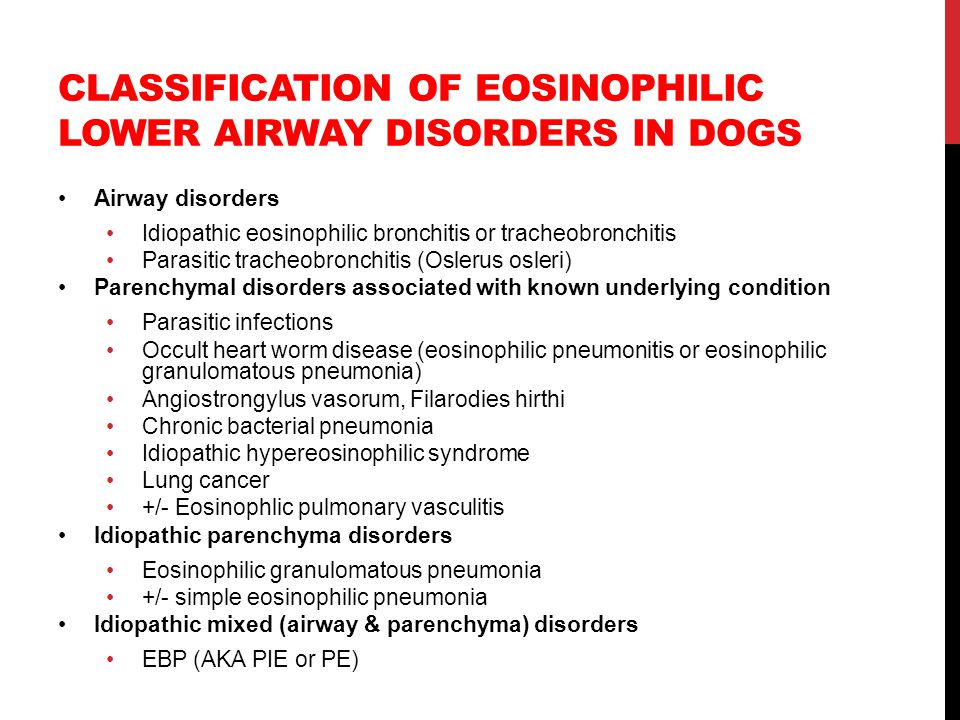 Classification of eosinophilic lower airway disorders in dogs