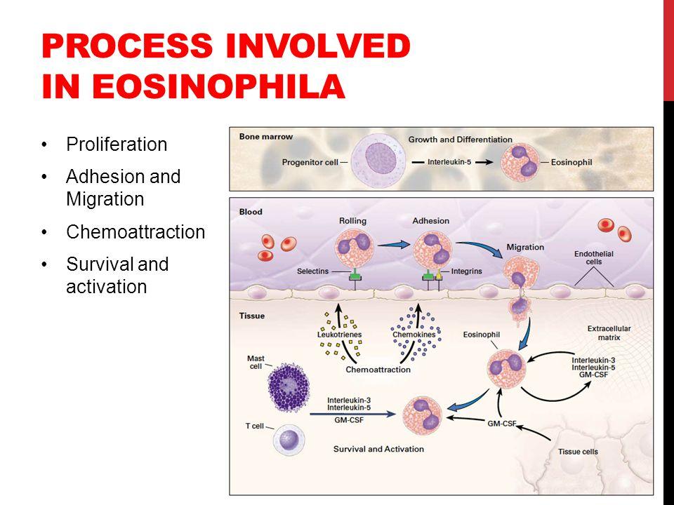 Process involved in eosinophila