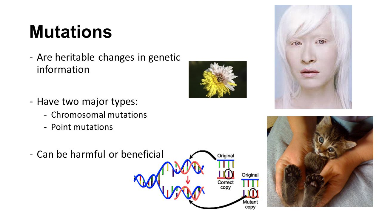 Mutations Are heritable changes in genetic information