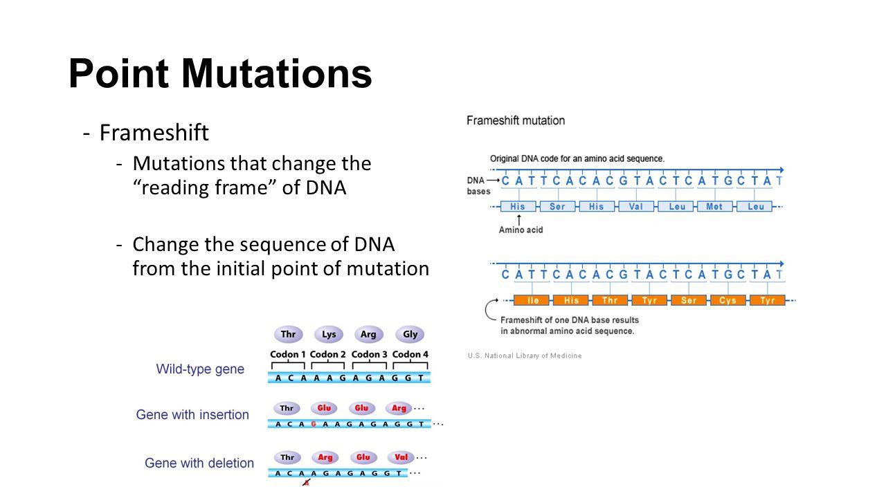 Point Mutations Frameshift