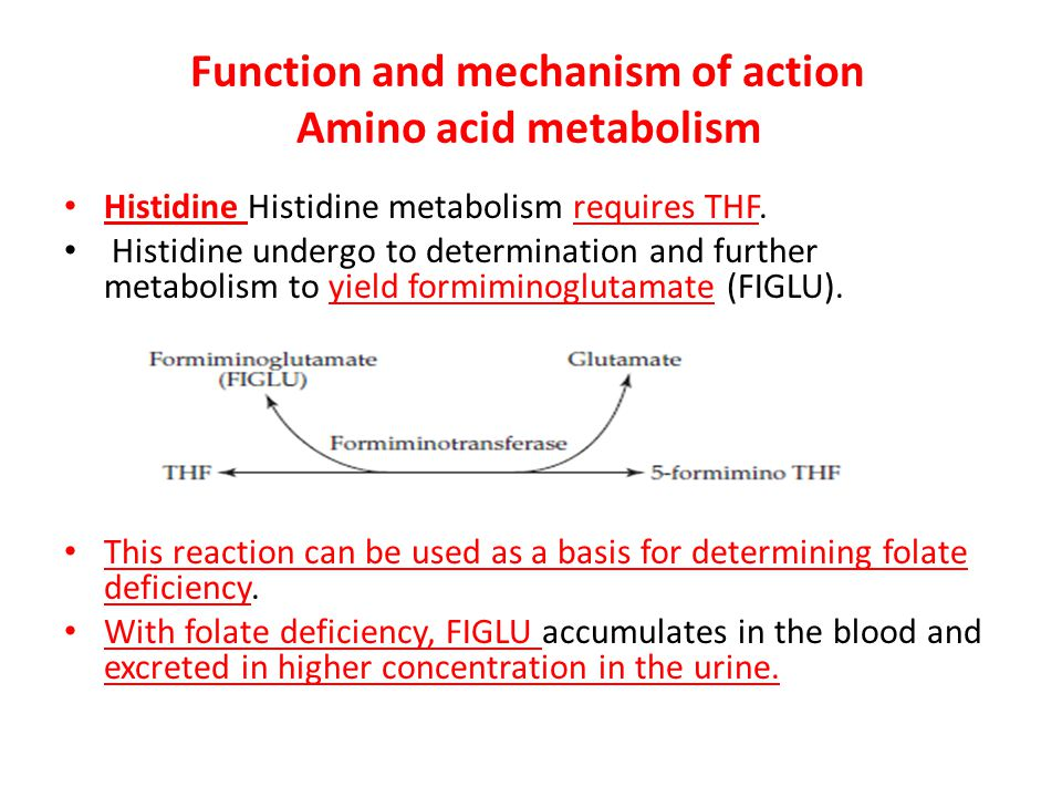 Function and mechanism of action Amino acid metabolism