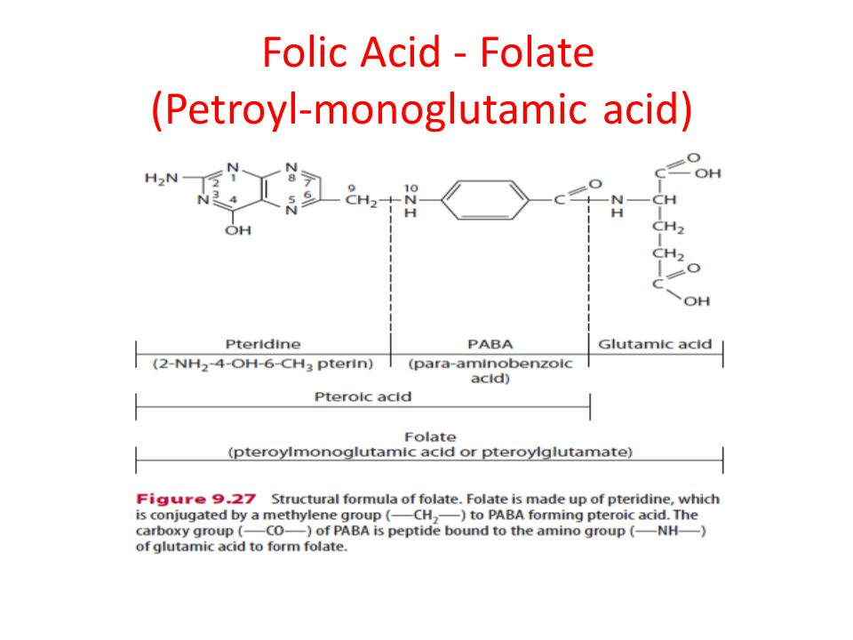 Folic Acid - Folate (Petroyl-monoglutamic acid)