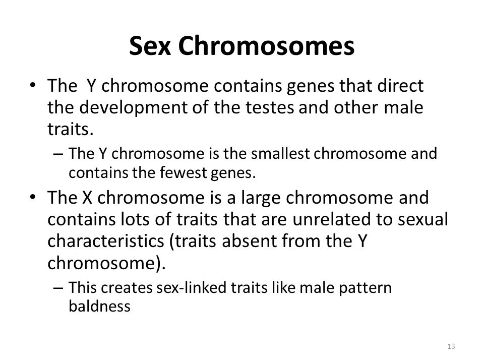Sex Chromosomes The Y chromosome contains genes that direct the development of the testes and other male traits.