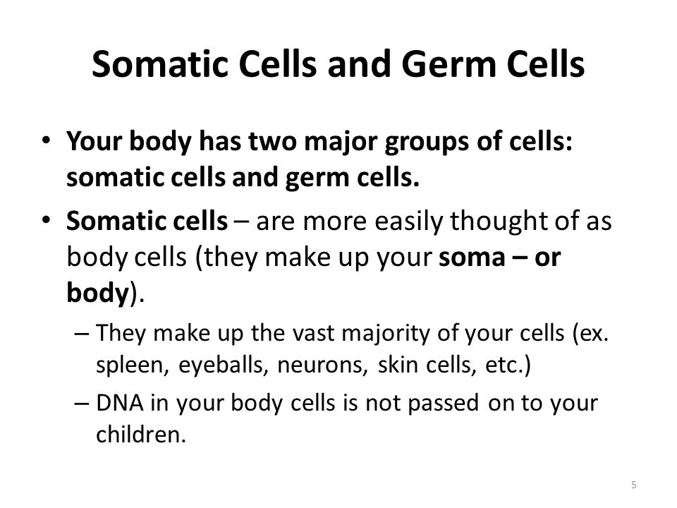 Somatic Cells and Germ Cells