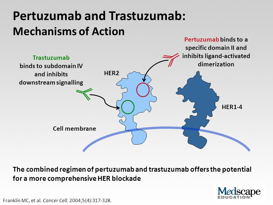 Trastuzumab binds to subdomain IV and inhibits downstream signalling