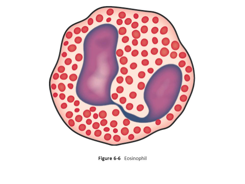 Renumber as Fig. 6-6 Figure 6-6 Eosinophil 22