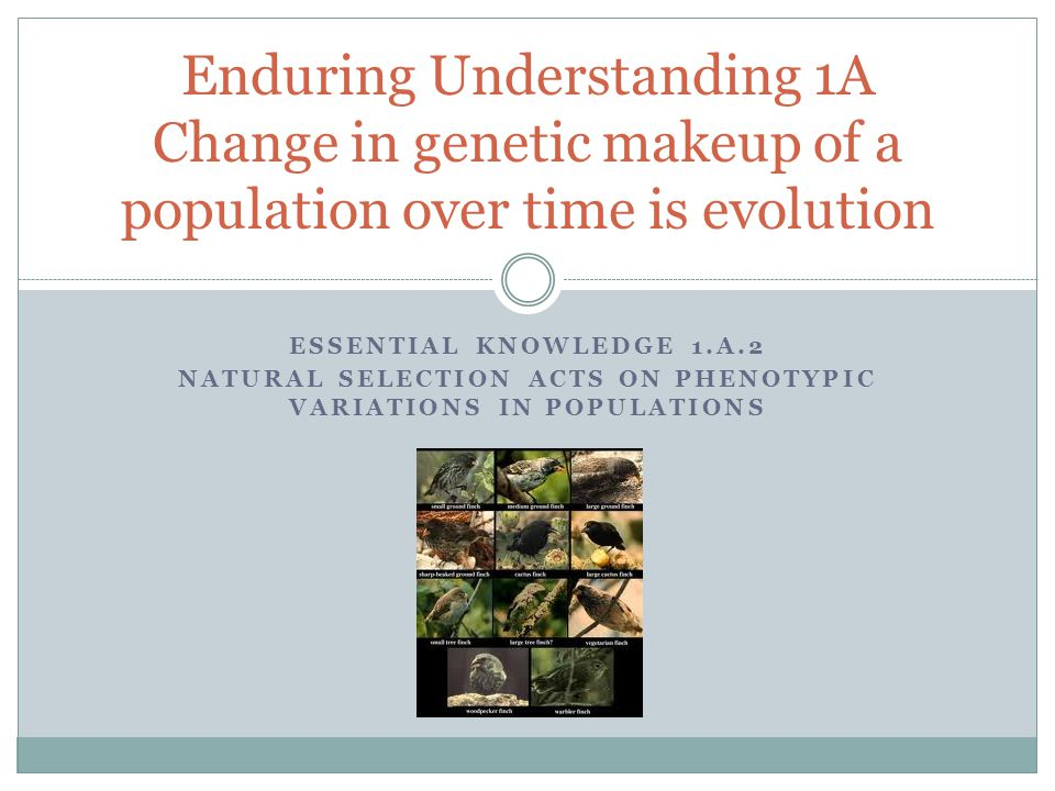 Natural selection acts on phenotypic variations in populations