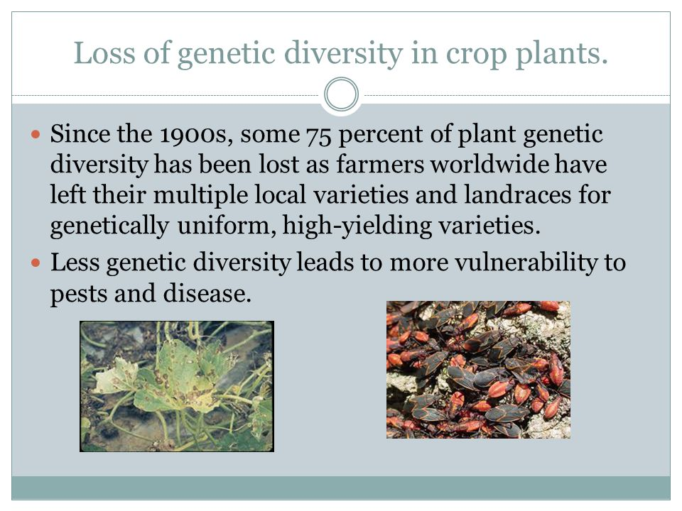 Loss of genetic diversity in crop plants.