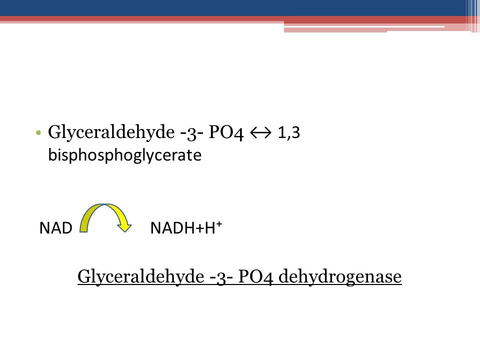 Glyceraldehyde -3- PO4 ↔ 1,3 bisphosphoglycerate