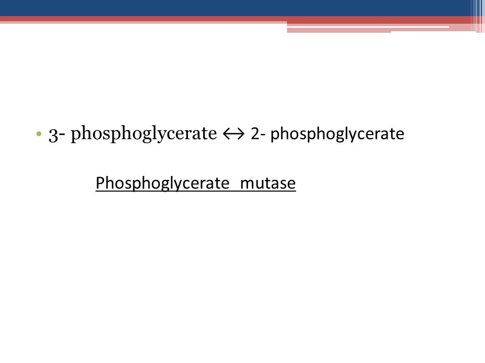 3- phosphoglycerate ↔ 2- phosphoglycerate