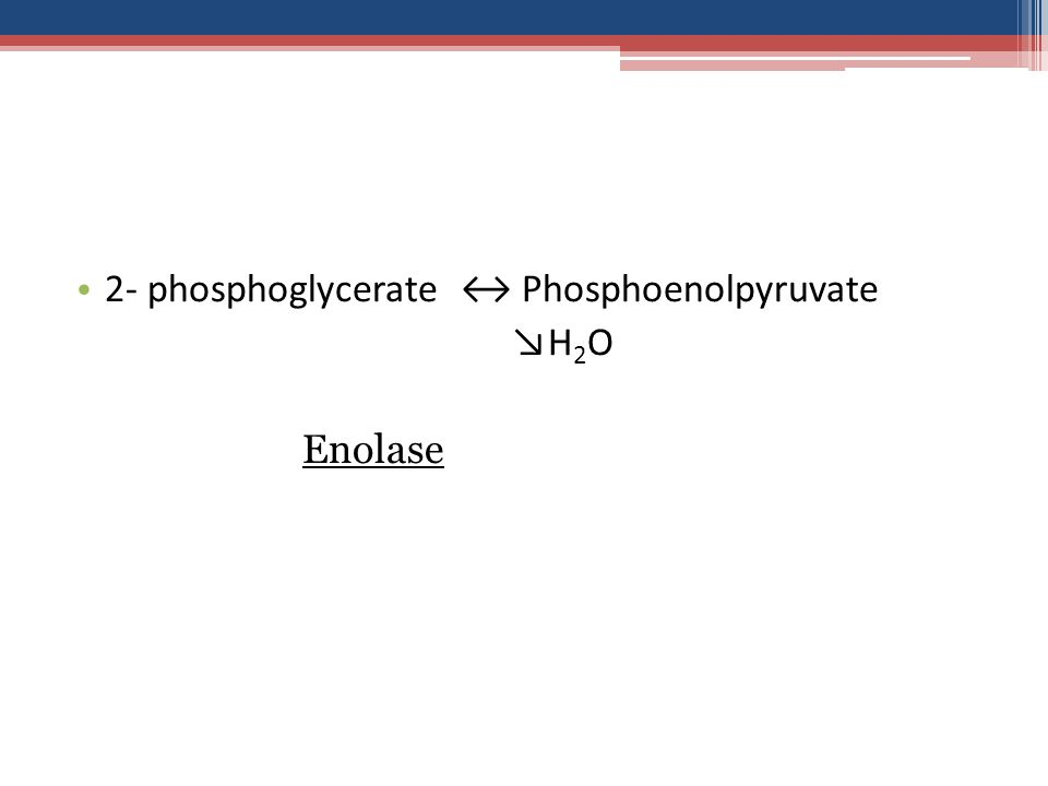 2- phosphoglycerate ↔ Phosphoenolpyruvate