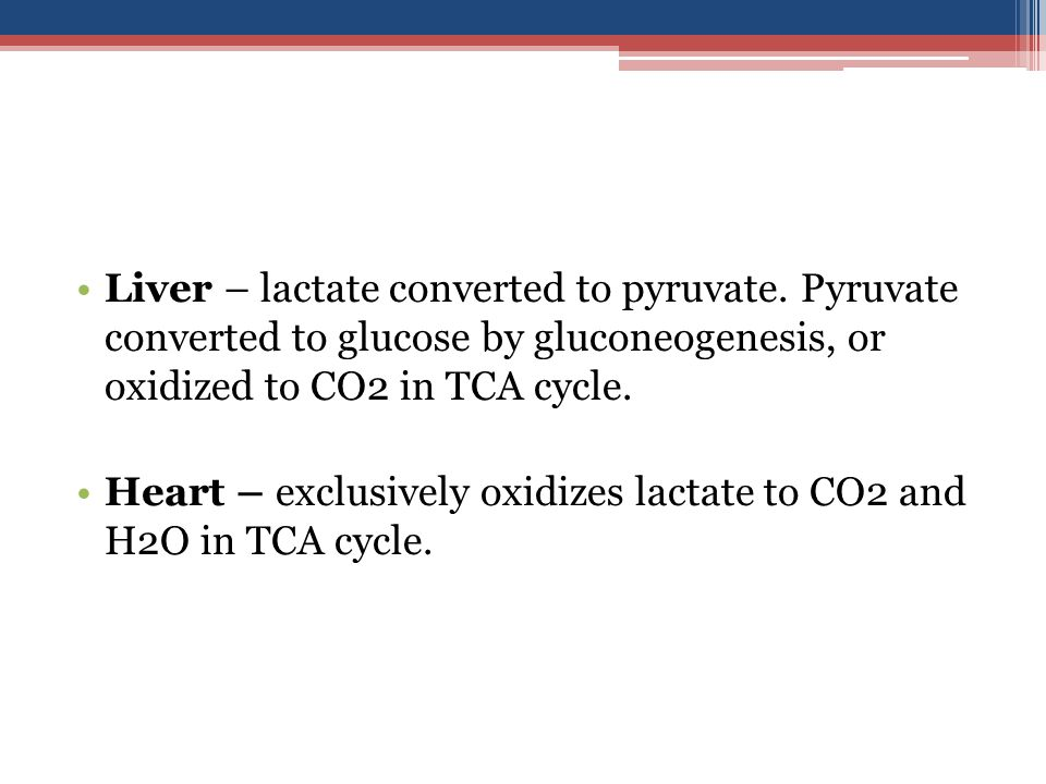 Liver – lactate converted to pyruvate