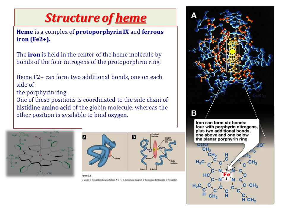 Structure of heme Heme is a complex of protoporphyrin IX and ferrous iron (Fe2+).