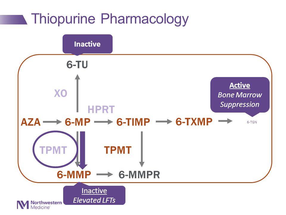 Thiopurine Pharmacology