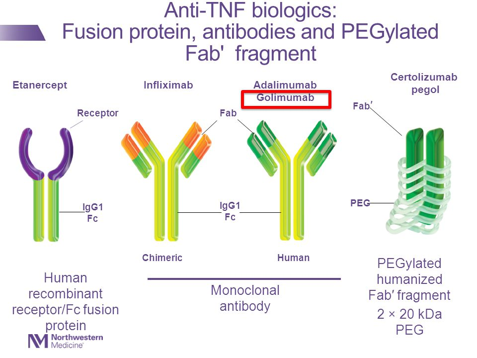Anti-TNF biologics: Fusion protein, antibodies and PEGylated Fab fragment