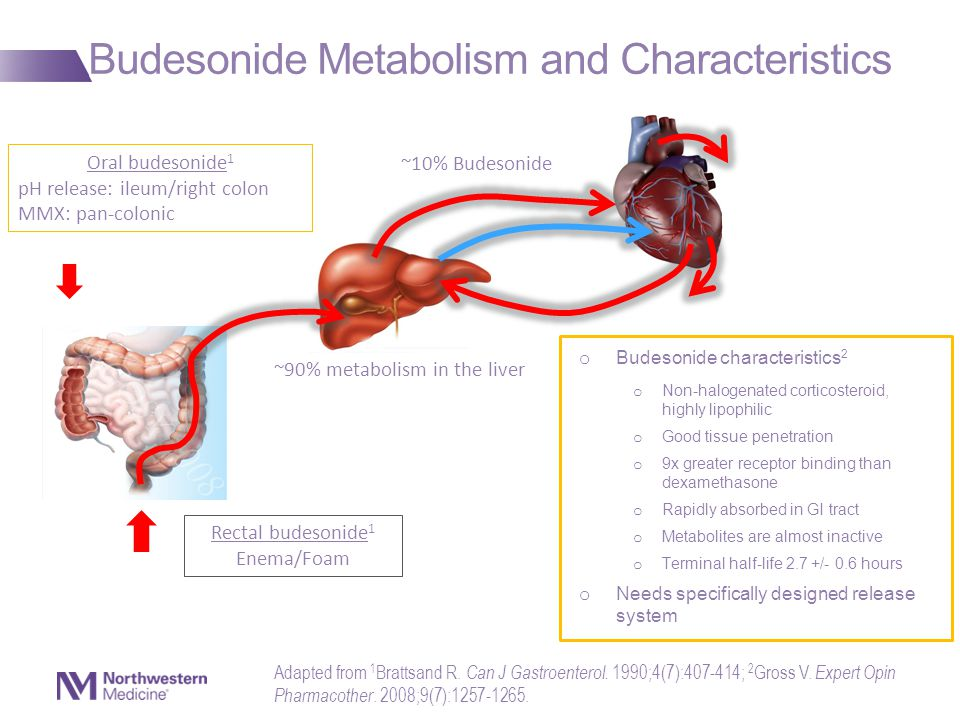 Budesonide Metabolism and Characteristics