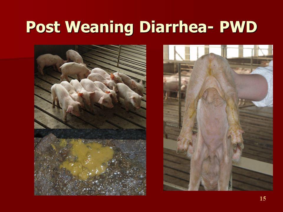Post Weaning Diarrhea- PWD