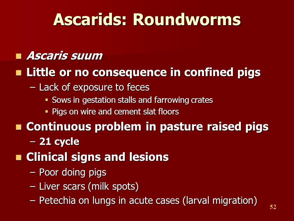 Ascarids: Roundworms Ascaris suum
